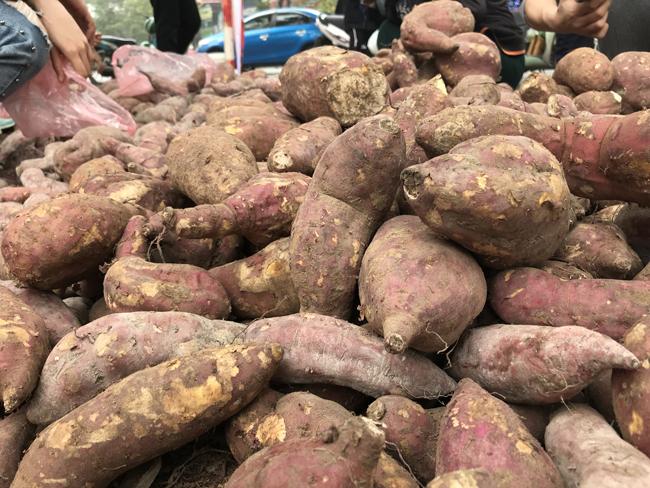 Vài ngày trở lại đây, một số địa điểm ở Hà Nội bày bán khoai lang nhật với giá khá rẻ, chỉ 13.000 đồng/kg.