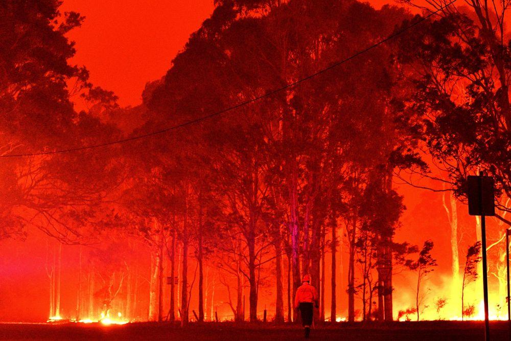 Úc: Chim thông minh biết dùng lửa để săn mồi, khiến cháy rừng trở thành đại họa - 3