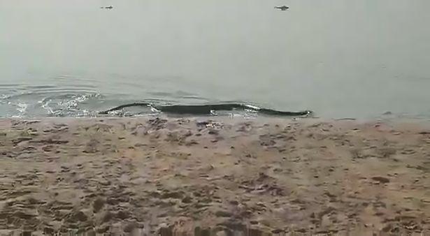 Video: Đang tắm nắng, hoảng hồn thấy trăn anaconda bò lên từ dưới nước - 1