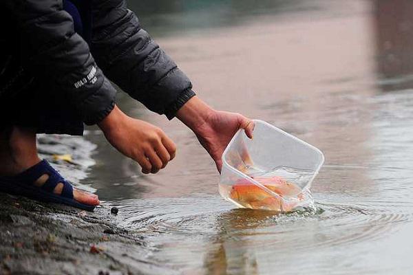 Cách thả cá chép cúng ông Công ông Táo sao cho ý nghĩa và linh thiêng nhất? - 1