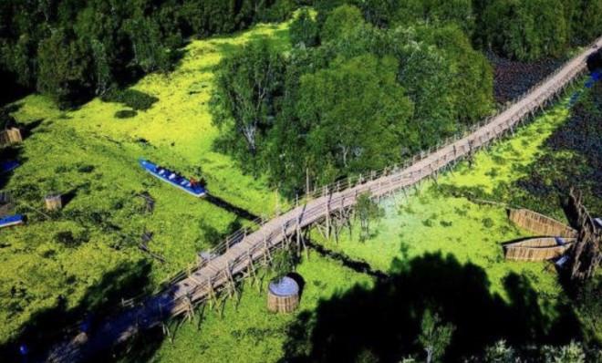 Ngỡ ngàng chiếc cầu tre dài nhất Việt Nam nằm giữa rừng tràm - 1