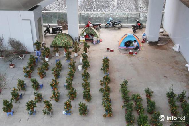 Vỉa hè, sân nhà ga đường sắt trên cao Cát Linh - Hà Đông thành chợ hoa Tết - 10