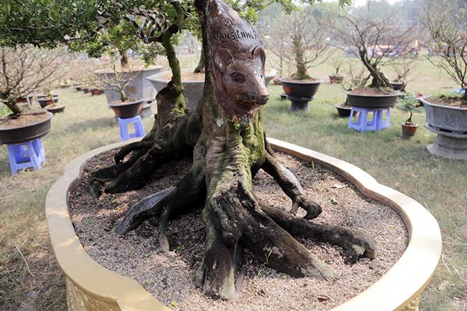 """Cây khế bỗng """"mọc thêm"""" đầu chuột xuất hiện tại """"khu nhà giàu"""" ở Sài Gòn - 1"""