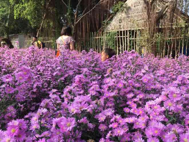 """Ùn ùn """"check-in"""" vườn hoa thạch thảo ở Cần Thơ - 8"""