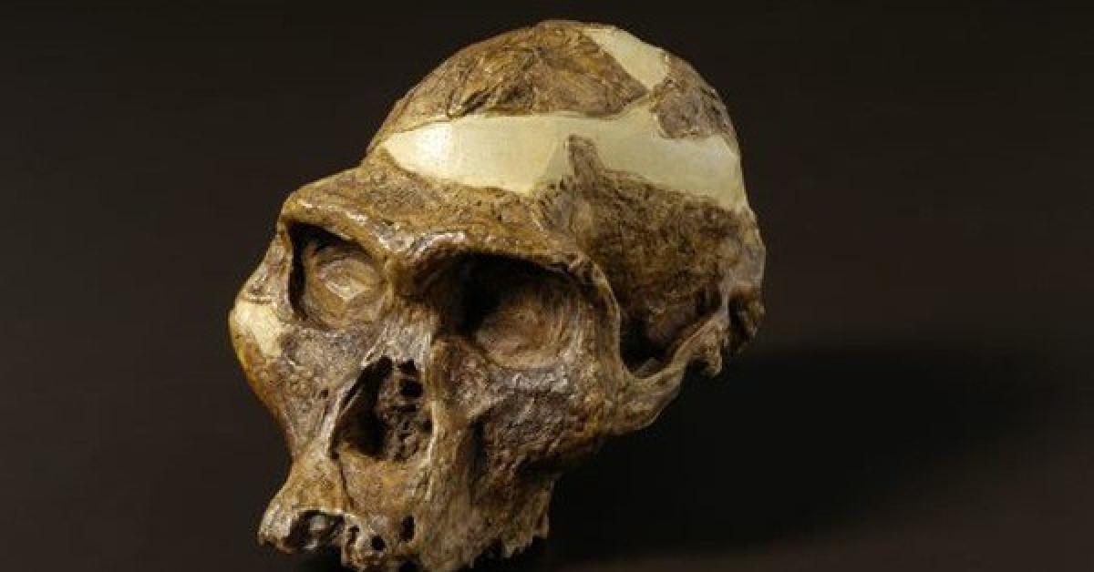 Bí ẩn loài người cổ mang hàm răng mãnh thú - 1
