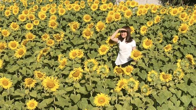 Giới trẻ rầm rộ check in vườn hoa mặt trời giữa lòng phố núi - 1