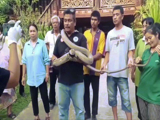 Video: Đang ăn tối, hoảng hồn thấy hổ mang chúa khổng lồ dài 5m ghé thăm