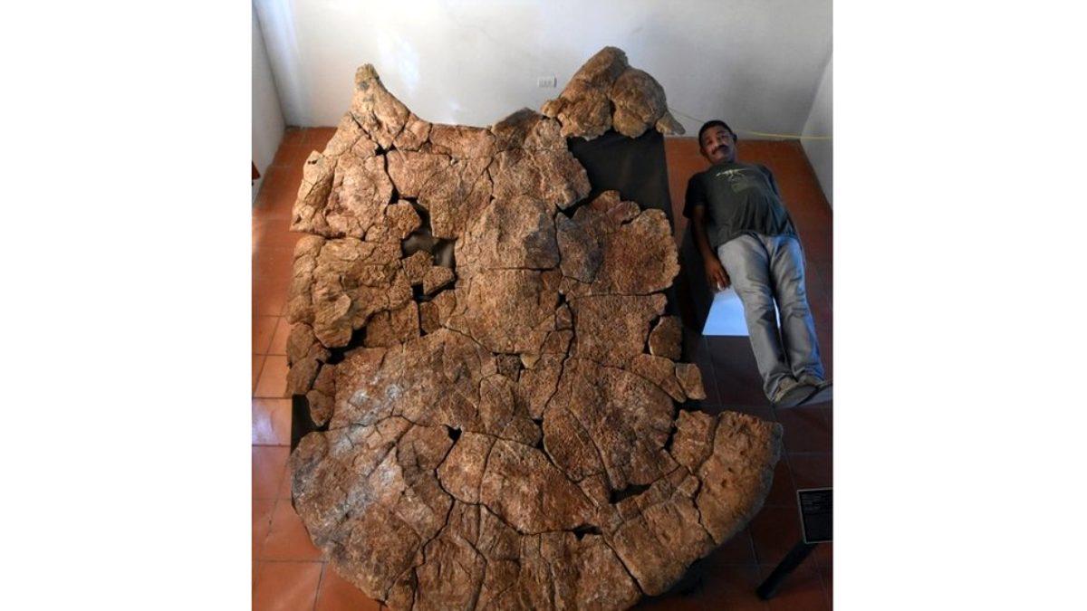 Rùa khổng lồ cổ đại to ngang ô tô tải - 1