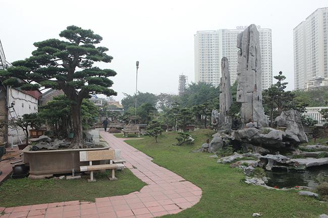 Trong khuôn viên hơn 2000m2 của ông Nguyễn Trọng Thành (Yên Sở, Hoàng Mai), nổi bật nhất là cây tùng la hán có tuổi đời hàng trăm năm. Đây là tác phẩm quý, hiếm, được đánh giá là cây tùng la hán đẹp nhất Việt Nam