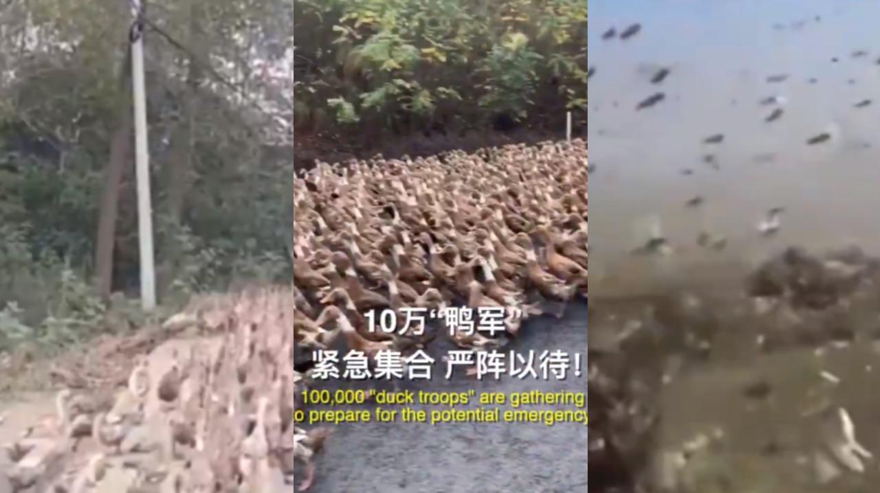 Nguy cơ đàn châu chấu 400 tỷ con đe dọa Trung Quốc - 1