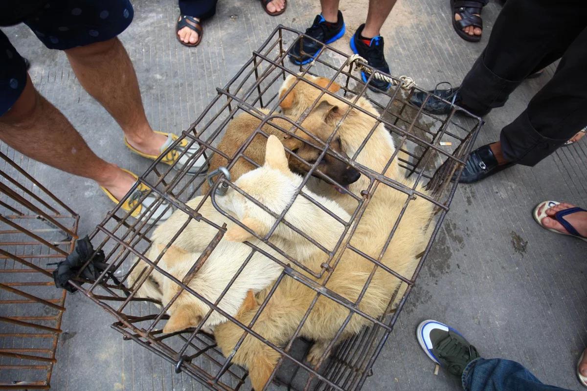 Thịt chó mèo bị cấm ở TQ với án phạt nặng vì nguy cơ lây lan corona - 1