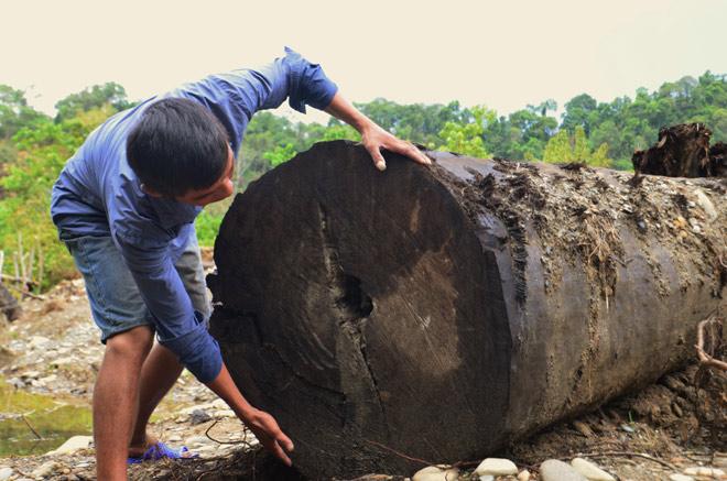 Khối gỗ lim xanh được 2 nông dân tìm thấy dưới suối có giá bao nhiêu? - 1