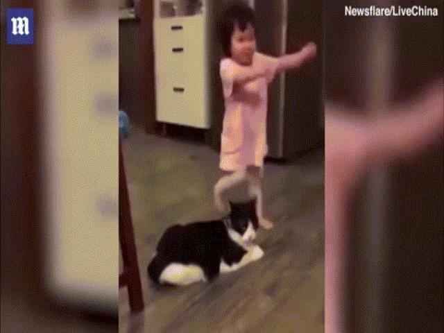 Clip: Phản ứng của mèo khi ngáng chân bé ngã khiến ai cũng phì cười