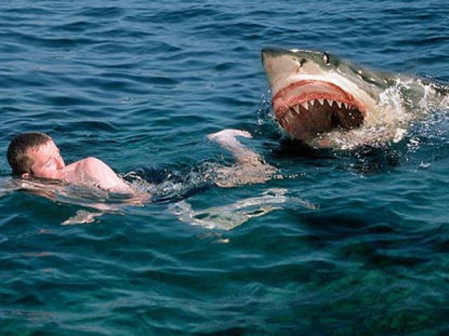 Khoảnh khắc kinh hoàng khi cá mập trắng tấn công người trên thuyền