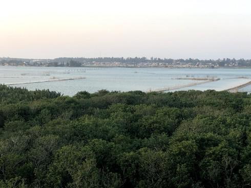 Lạc vào Rú Chá  – khu rừng ngập mặn thần tiên tại Huế - 1