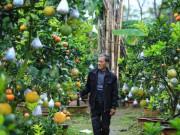 """Vườn cây bạc tỷ """"Thập toàn thập mỹ"""" của lão nông hút khách mỗi dịp Tết về"""