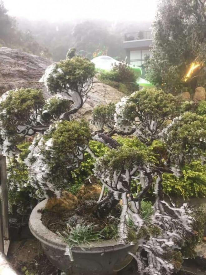 Tuyết trắng bao phủ nhiều nơi ở tỉnh Lào Cai - 7