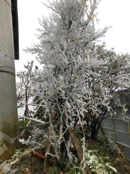 Tuyết trắng bao phủ nhiều nơi ở tỉnh Lào Cai - 4