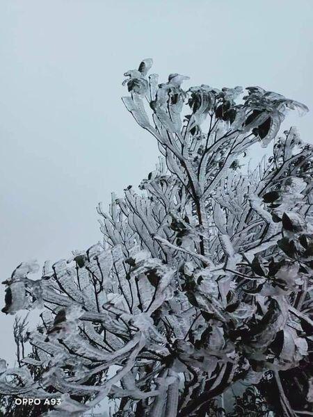 Tuyết trắng bao phủ nhiều nơi ở tỉnh Lào Cai - 5