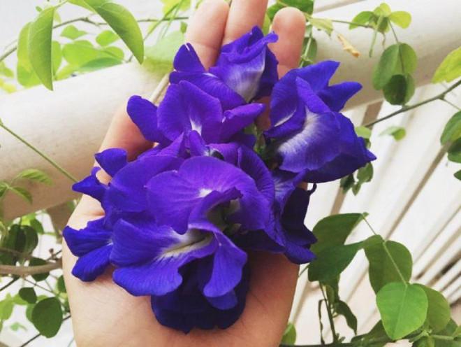 Không chỉ đẹp lung linh, loài hoa này còn có nhiều tác dụng diệu kỳ đối với sức khỏe - 4