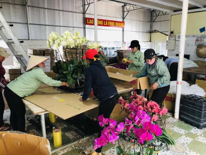 Cảnh báo hoa lan Trung Quốc đội lốt hoa Đà Lạt - 1