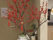 Kinh tế điêu đứng vì COVID nhưng dân Việt vẫn vung tiền mua đào đông đỏ nguyên cây về chơi Tết