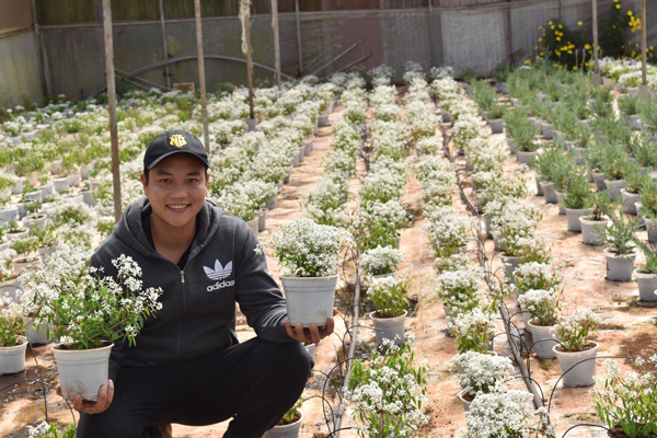 Loại hoa mới xuất hiện đã hút khách, có hàng nghìn chậu bán vẫn không đủ - 1
