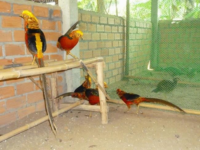 Vào dịp Tết, con vật với 7 màu trên cơ thể này được người ta tìm mua nhiều với quan niệm chúng có thểmang lại may mắn.