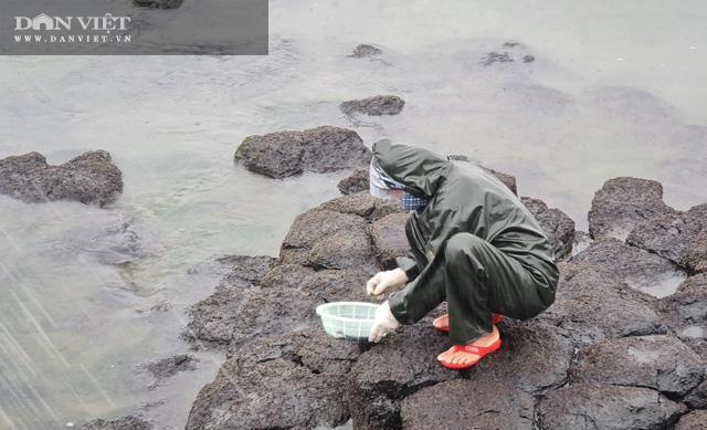 Quảng Ngãi: Rét buốt căm căm, dân rủ nhau hái thứ rau nhơn nhớt ăn ngon tuyệt lại đại bổ - 4