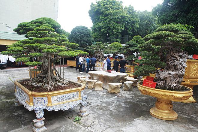 """Vườn cây di sản của """"ông vua"""" cây cảnh Việt Nam, đại gia Trung Quốc trả hơn 500 tỷ không bán - 1"""