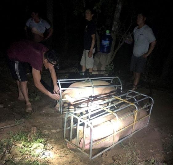 Lợn tìm đường xuất lậu sang Trung Quốc, kéo giá trong nước tăng cao - 1