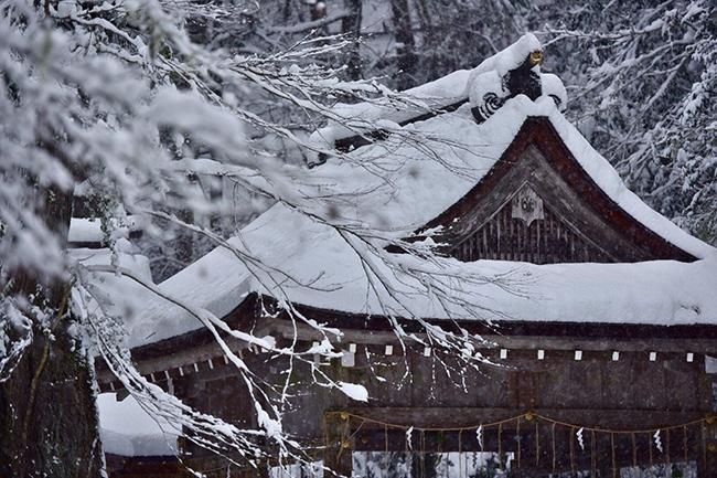 Chiêm ngưỡng vẻ đẹp mê hoặc trong tuyết của ngôi đền thần ở Nhật Bản - 1