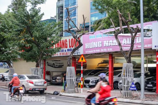 Hàng cây sưa 'trăm tỷ' chết khô trên phố Hà Nội sẽ xử lý thế nào? - 1