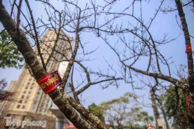 Tận thấy những cành đào dán tem đầu tiên xuất hiện tại Hà Nội - 3