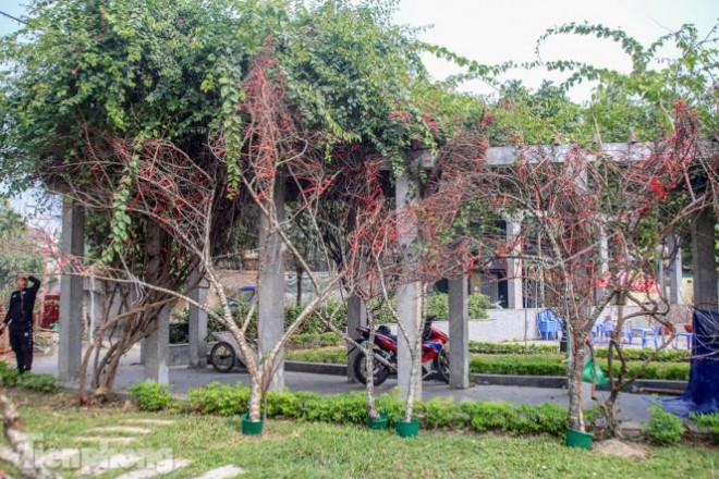 Tận thấy những cành đào dán tem đầu tiên xuất hiện tại Hà Nội - 6