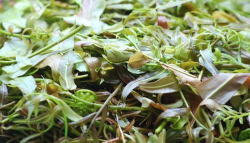 Kon Tum có 1 loại lẩu có hơn 10 loại lá rừng và là một đặc sản nức tiếng ở Tây Nguyên - 1