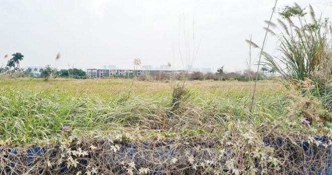 Biệt thự nuôi gà, trồng rau ngoại thành Hà Nội bất ngờ được thổi giá dựng ngược - 2