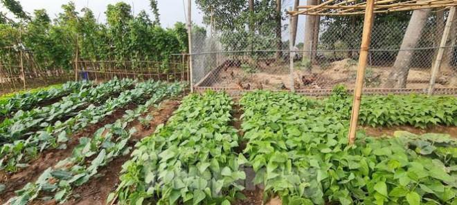 Biệt thự nuôi gà, trồng rau ngoại thành Hà Nội bất ngờ được thổi giá dựng ngược - 9
