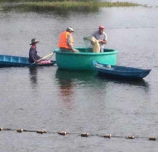 Vũng Tàu giăng lưới bắt được cá sấu dài 2m ở hồ nước - 1
