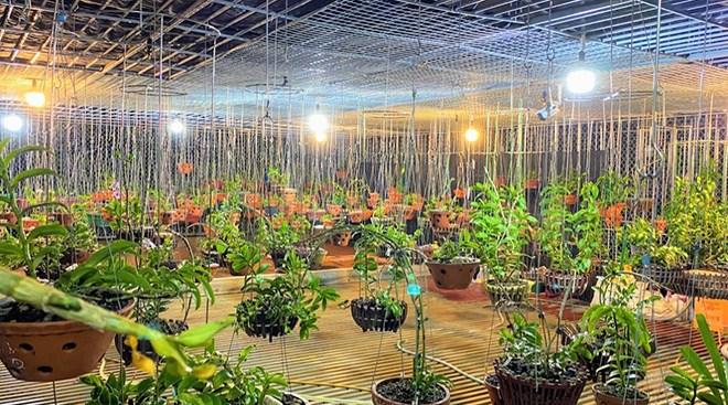 Anh nông dân nghèo bỗng chốc đổi đời, thu nhập gấp chục lần nhờ loại cây nhiều người mê - 1