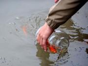Ảnh: Người Hà Nội thả cá tiễn Táo quân lên thiên đình