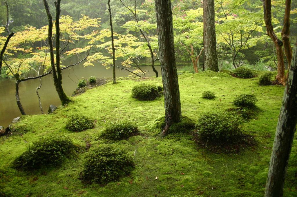 Mùa xuân châu Á cũng khiến du khách say lòng người bởi những cảnh đẹp này - 18