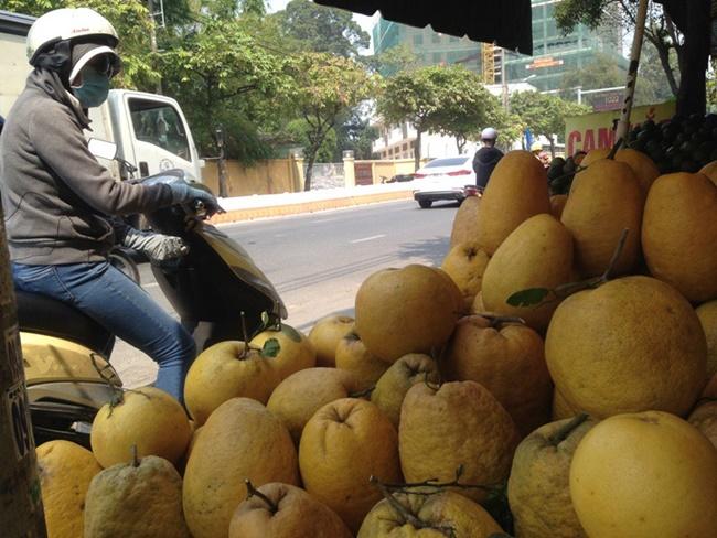 """Ở Việt Nam, không hiếm những quả """"siêu to, khổng lồ"""", mới đây mộtloại quả kích thước """"khủng"""" xuất hiện được gọi là bưởikỳ đà."""