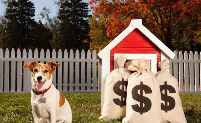 Trên thế giới có không ít tỷ phú, triệu phú đã trao toàn bộ tài sản thừa kế khi qua đời cho những chú chó cưng của mình.