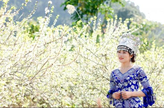 Thiếu nữ khoe sắc bên hoa mận nở trắng muốt nơi cổng trời đẹp như tranh - 8
