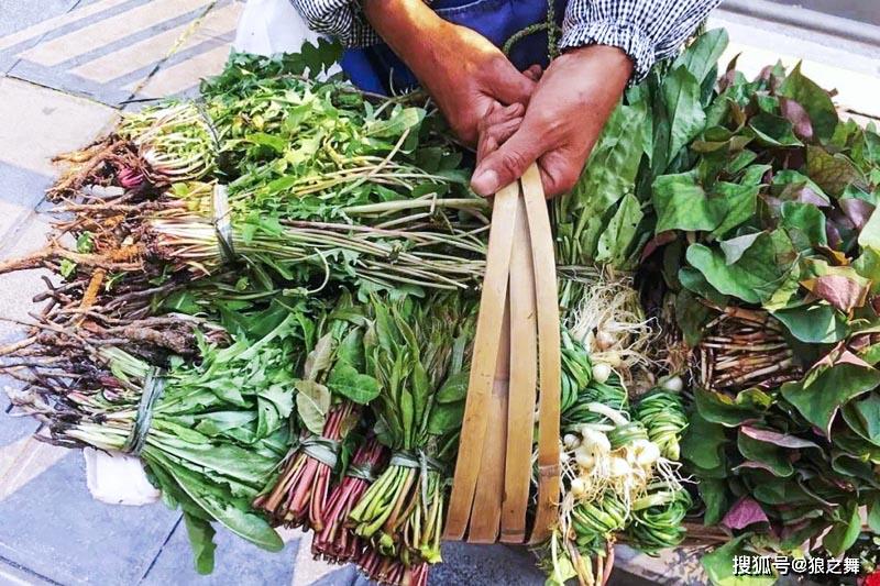 Thấy loại rau dại này mọc, đừng nhổ vứt vì nó rất quý, làm món ăn thanh nhiệt, bổ gan - 1