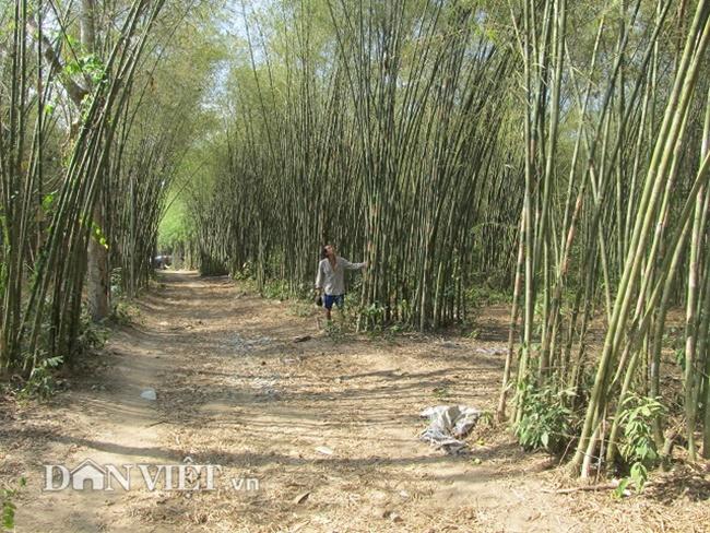 Thời gian trồng thích hợp vào khoảng tháng 7 - 8 (âm lịch). Vì thời điểm này ngay mùa mưa, thuận lợi cho cây sinh trưởng và phát triển.