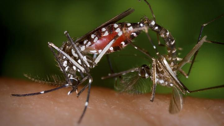 Ổ dịch mới chưa dập xong, Campuchia phải đối phó loài gây bệnh lần đầu có ở thủ đô - 1