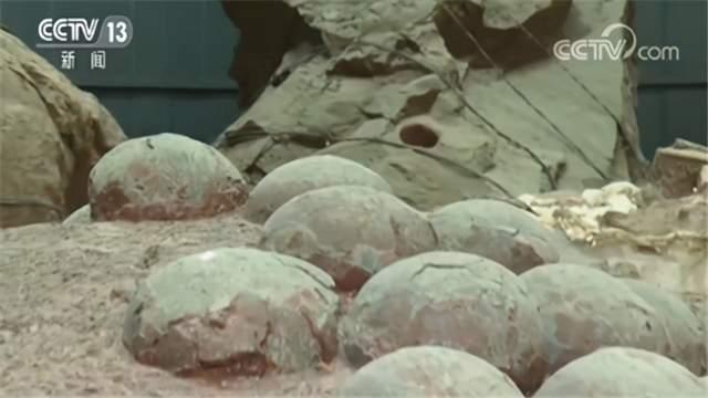 Đứa trẻ 9 tuổi tìm thấy hoá thạch trứng khủng long, tại sao việc học lịch sử lại quan trọng như vậy - 1