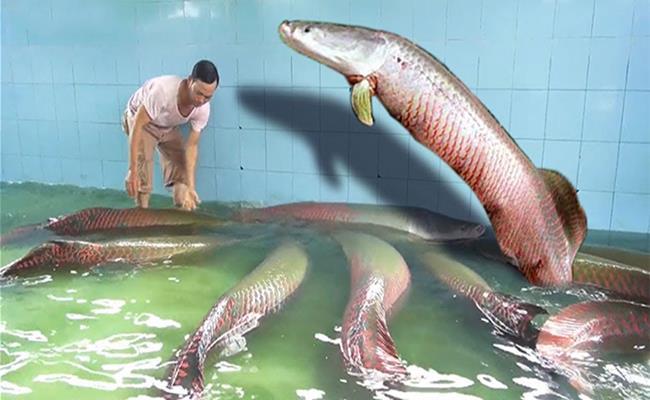 """Cá hải tượng - loài """"quái vật"""" nước ngọt lớn nhất thế giới là 1 trong số đó."""